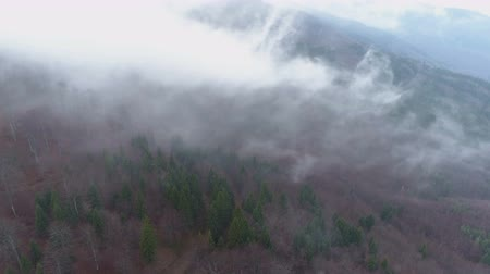 autumnal : Morning mist floating above the dense woods, clouds above the forest area