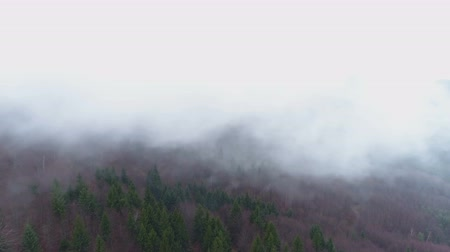 contorno : Mountain forest in fog. Twilight landscape with fog above forest Stock Footage