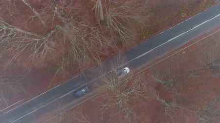 hazardous : Drone follows white car followed by two other black cars, driving on forest asphalt road Stock Footage