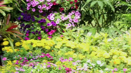 ブッシュ : Footage waterfall flows and vivid flowers pot decoration in cozy home flower garden on summer.