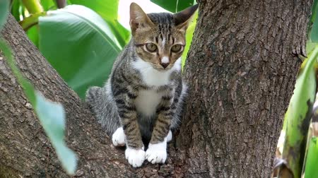 domestic animals : A Little cat on tree