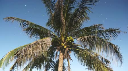 coconut palm tree : Coconut tree water reflection