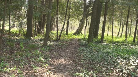 trilha : A Trail In The Woods, Nature, Green, Hiking Still