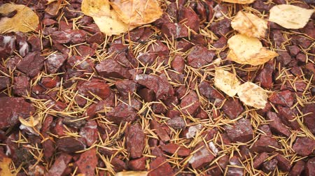 nemli : Autumn leaves and conifer needles lie on wet gravel. Pan Stok Video
