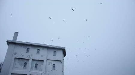 dom : Lateral, exterior view of spooky, creepy, horror house, building. Seagulls are flying around it.