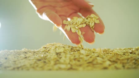 yulaf ezmesi : Beautiful woman hand scooping rolled oats, slow motion video
