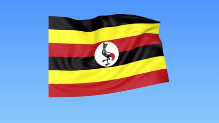 unify : Waving flag of Uganda, seamless loop. Exact size, blue background. Part of all countries set. 4K ProRes with alpha Stock Footage