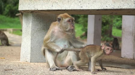 desistir : Funny video of monkey mother taking care of her baby