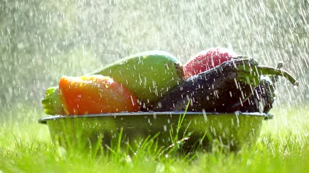 beringela : Fresh vegetables in a bowl and scattering water drops super slow motion video. Shot against sun at 500 fps