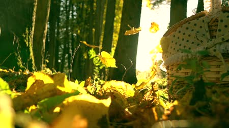 düşmeler : Falling yellow leaves against blazing sun and picnic basket. Sunny autumn day. Super slow motion shot