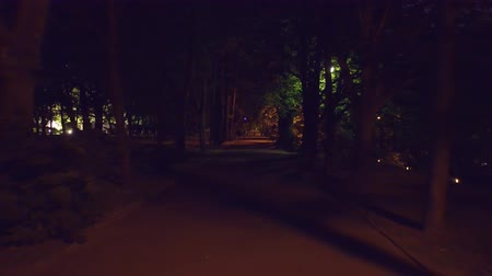 straight road : POV steadicam walk along summer park alley at night. 4K clip