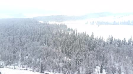 softwood forest : Long aerial clip of a snowy winter scenery in southern Poland, the Tatra mountains