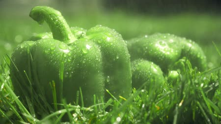 wetness : Pouring water on green sweet peppers Stock Footage