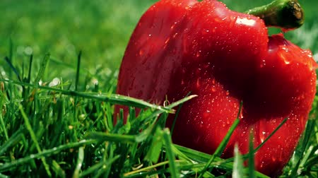 nemli : Slow motion shot of wet red sweet pepper falling on the grass