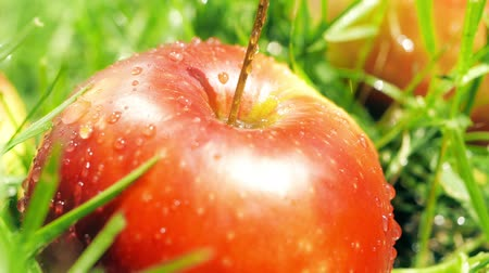 wetness : Sprinkling water on red apple