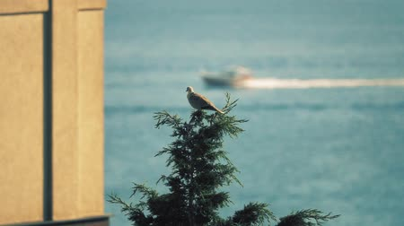defocus : Bird on the top of the tree against sea scenery Stock Footage