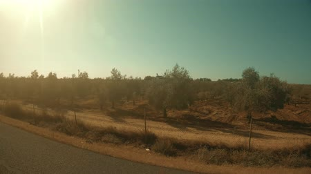 on the go : Spanish orchards as seen from moving car