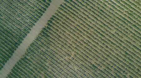 проворный : Aerial top-down rising shot of a big vineyard