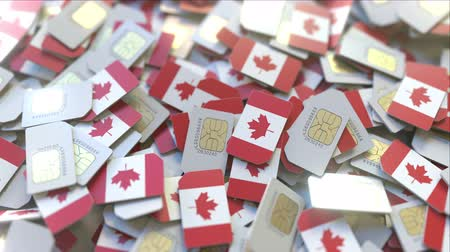 abbonamento : SIM cards with flag of Canada. Canadian cellular network related conceptual 3D animation Filmati Stock