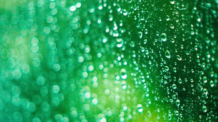 nemli : Raindrops on the window on a rainy day. Close-up racking focus shot