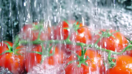 wetness : Slow motion shot of pouring water on a bunch of cherry tomatoes