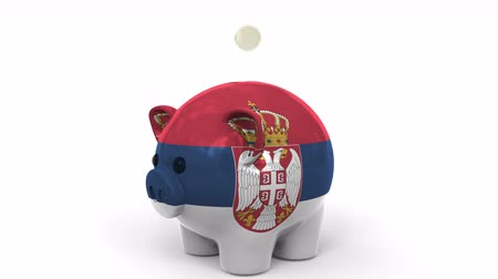 centavo : Coins fall into piggy bank painted with flag of Serbia. National banking system or savings related conceptual 3D animation