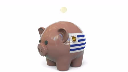centavo : Putting money into piggy bank with flag of Uruguay. Tax system system or savings related conceptual 3D animation Stock Footage