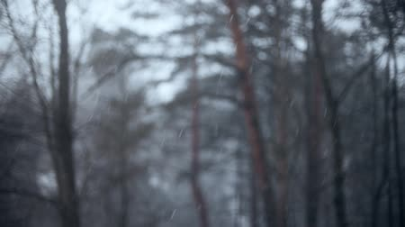снежинки : Snow falling on blurred trees background, slow motion shot