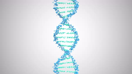 vertical : DNA molecule helix, looping 3D animation