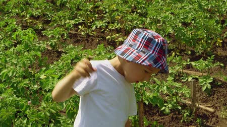 persone : Child is picking strawberries