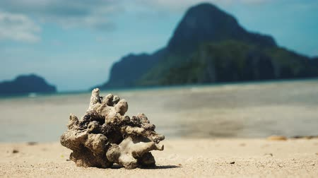 Dead coral on the beach in the philippines. Stock Footage