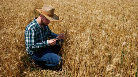 verifying : Man farmer with hat in the wheat field. Farmer checking the grain production. High crop yield. Stock Footage