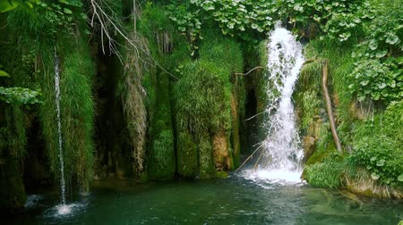 plitvice : Waterfall and moss footage.