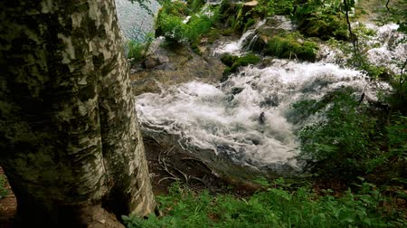 plitvice : Waterfall near a big tree in the forest recorded in slow motion.