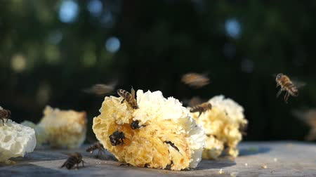 herbicides : Work bees in hive.Bees convert nectar into honey and cover it in honeycombs. Stock Footage