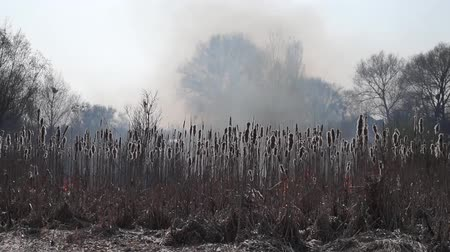 forest destruction : Field Fire Burning