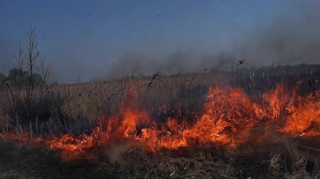 prairie : Field Fire Burning