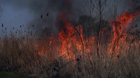 regenerating : On the field burning dry grass. Footage. Burning of straw on the field. Fire, Burning old grass in the field