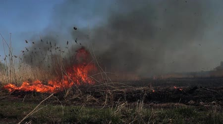 acidente : On the field burning dry grass. Footage. Burning of straw on the field. Fire, Burning old grass in the field