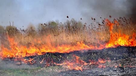 On the field burning dry grass. Footage. Burning of straw on the field. Fire, Burning old grass in the field