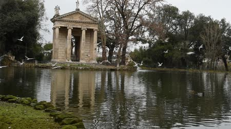 kiskacsa : Geese and ducks at the lake of Villa Borghese in Rome, fed by tourists Stock mozgókép
