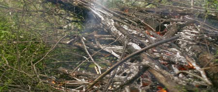 destruir : Closeup of burning bushes and tree cuttings in the forest. Stock Footage