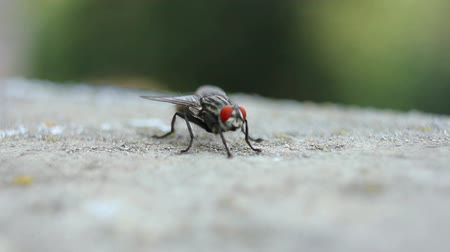 insetos : Insect fly