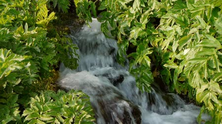 yemyeşil bitki örtüsü : HD  video of a small waterfall trickling through leaves and plants in a forest Stok Video