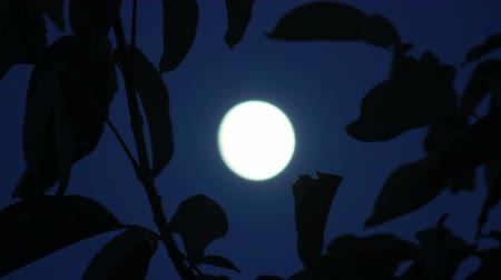 tajemnica : Moon shining between the branches of trees Wideo