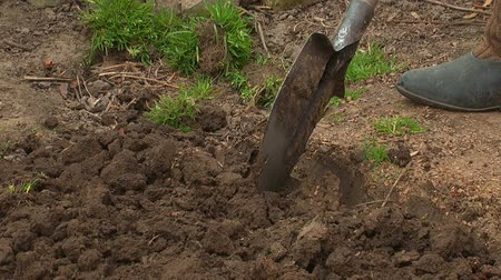 kielnia : Close-up of people digging up the ground with a shovel Wideo