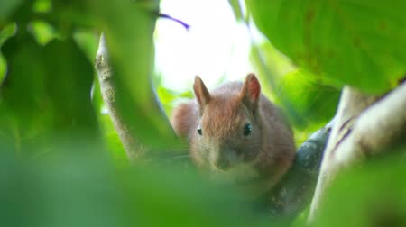 белка : Wild young squirrel sitting on a tree branch in summer forest