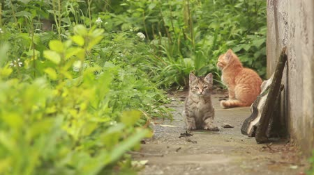 küçük kız : Two small kittens are playing with each other at in the garden