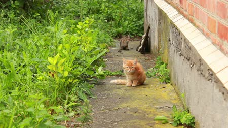 kotki : Two small kittens are playing with each other at in the garden