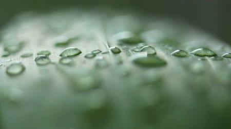 gramado : Dew on grass Stock Footage